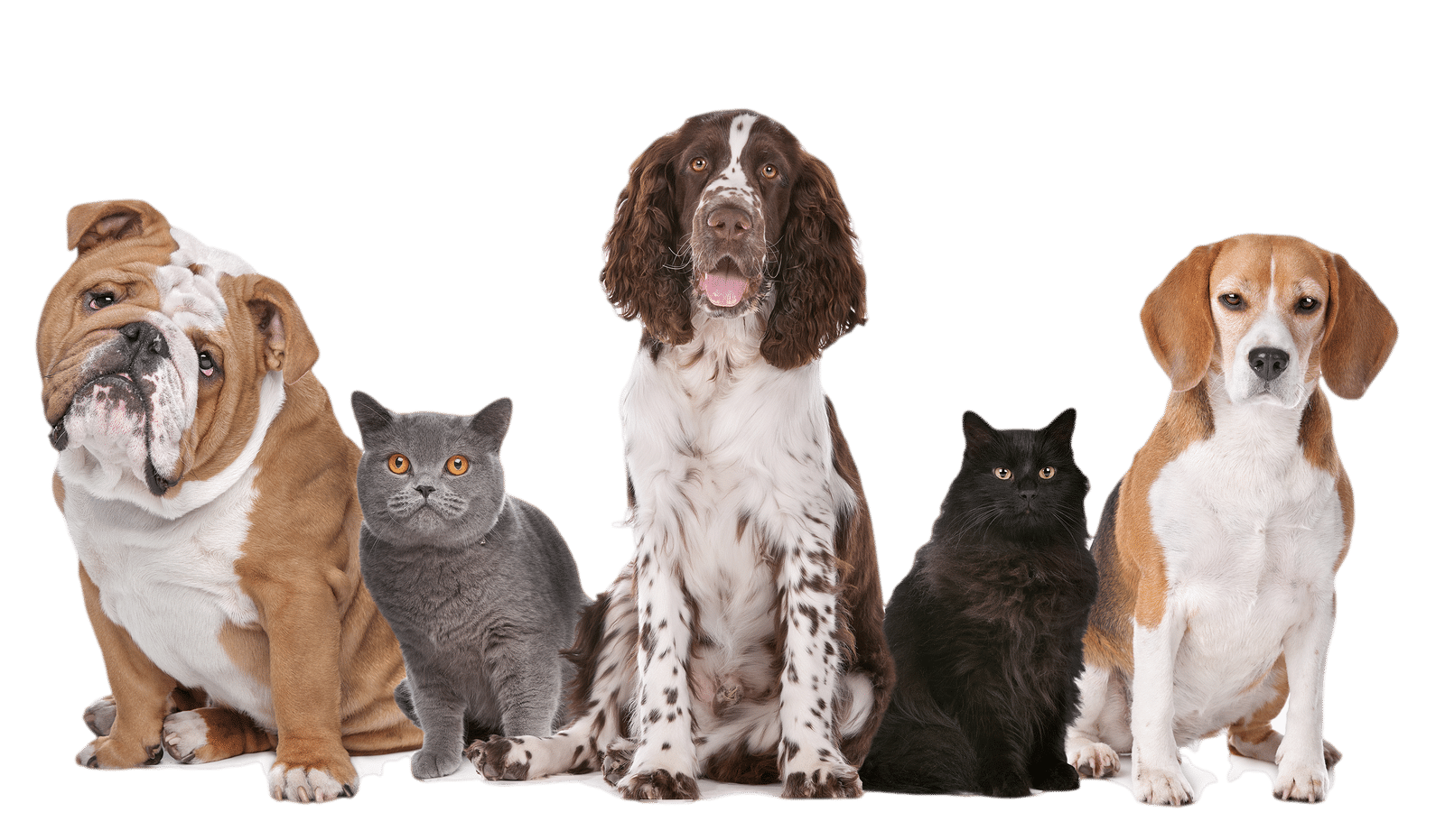 pet product ads facebook